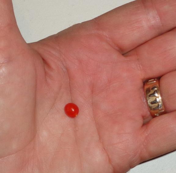 the world s tiniest tomato theeasygarden com