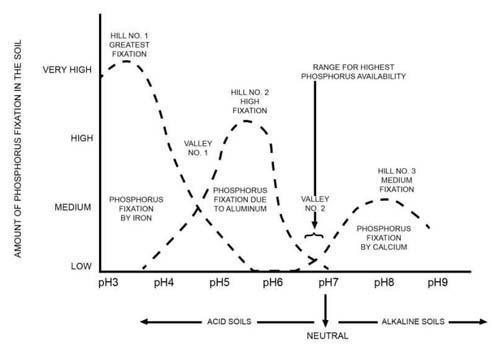 3-30PhosphorusFixationGraphGEORGE.jpg