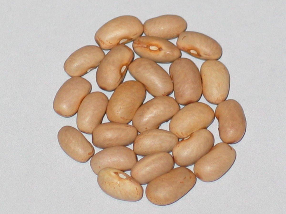 adams-family-six-weeks-bean.JPG