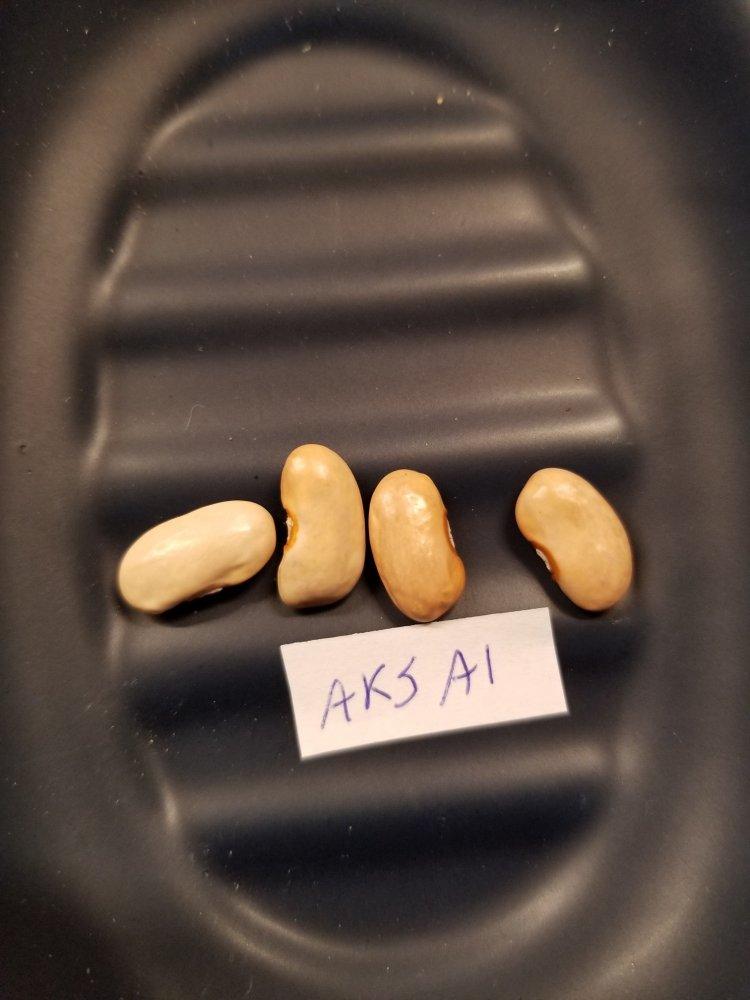 Aksai Beans.jpg