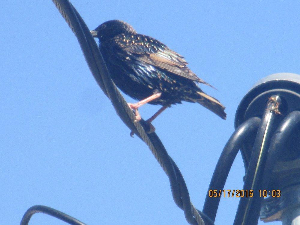 another bird 1.JPG
