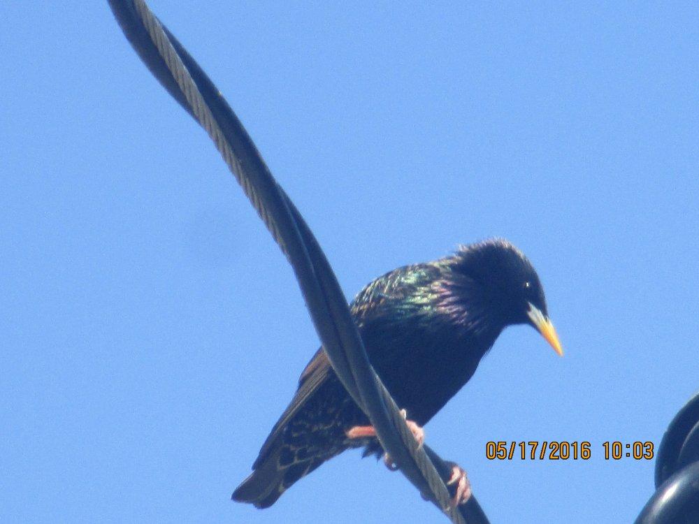 another bird.JPG