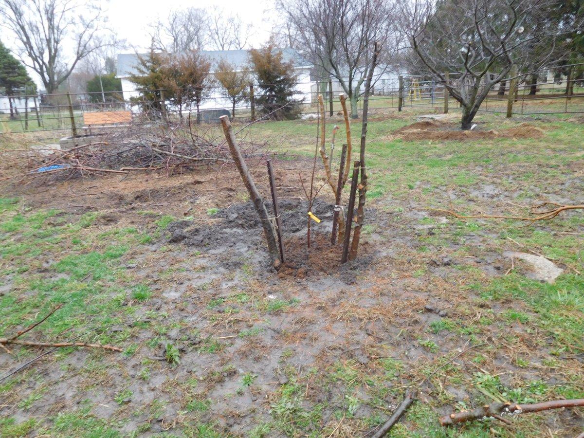 Apple tree planting, 03-30-19, #10.jpg