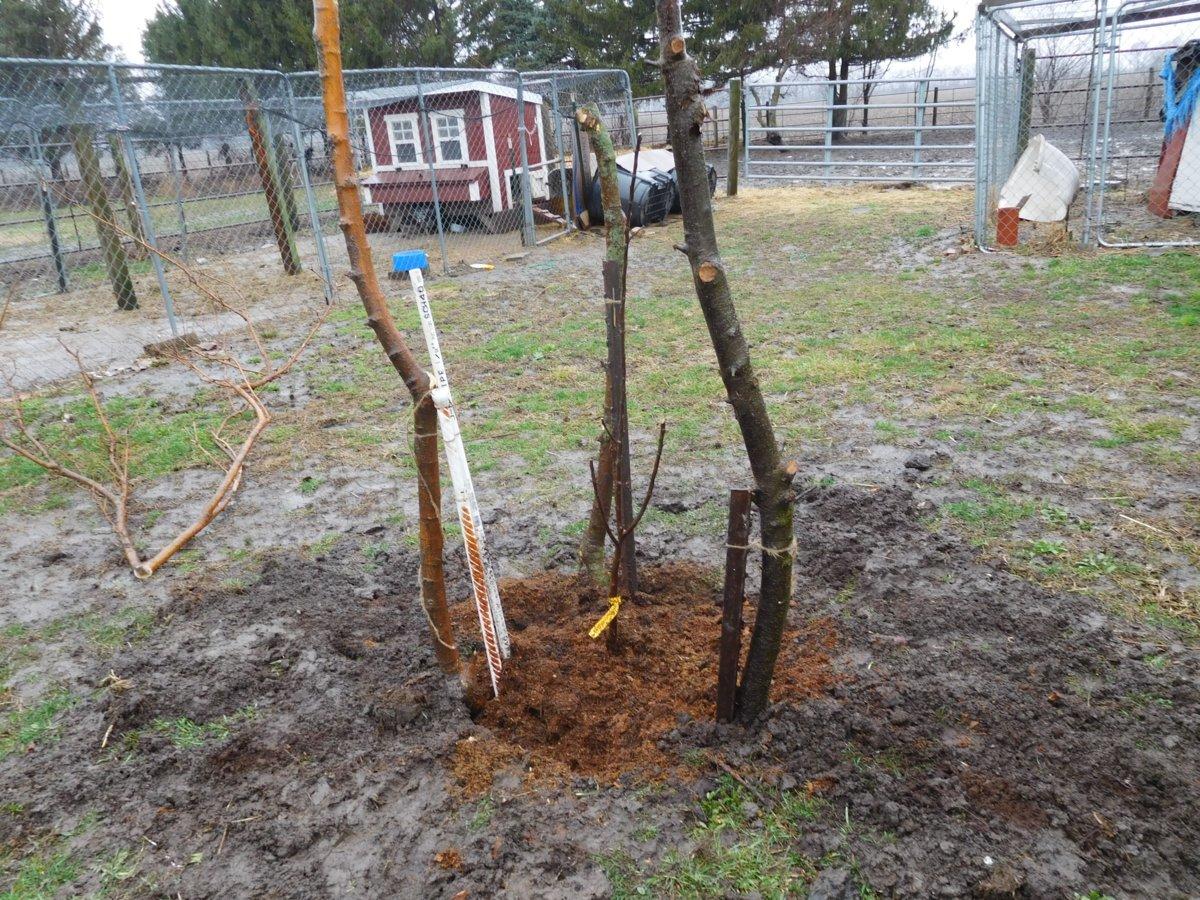 Apple tree planting, 03-30-19, #9.jpg