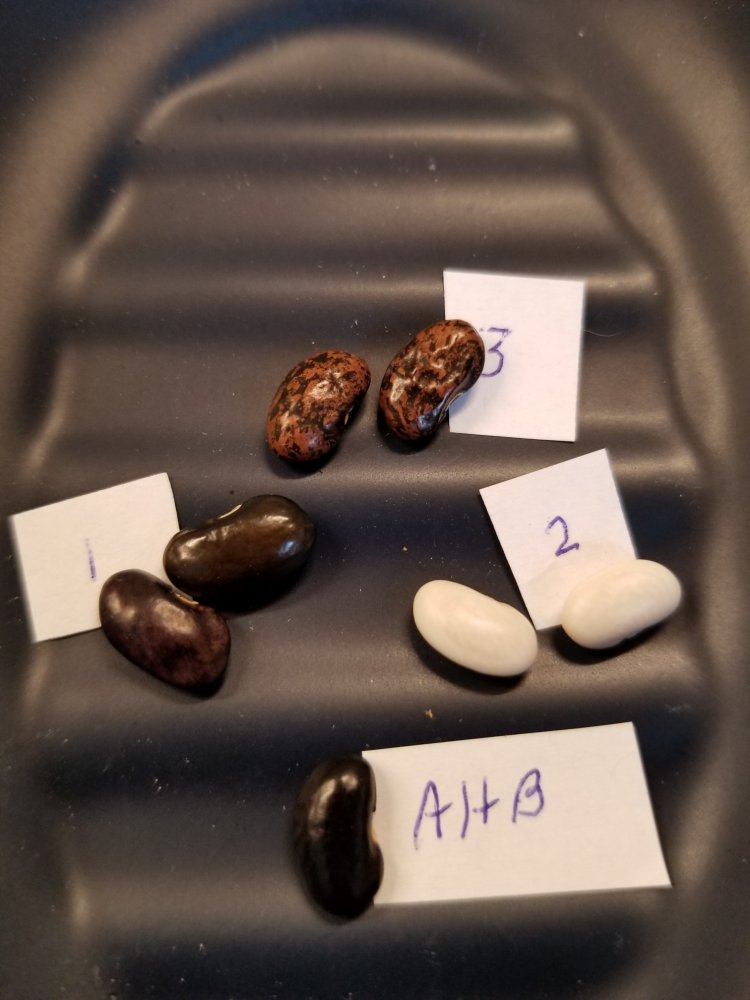 Ausmus Holler Beans.jpg