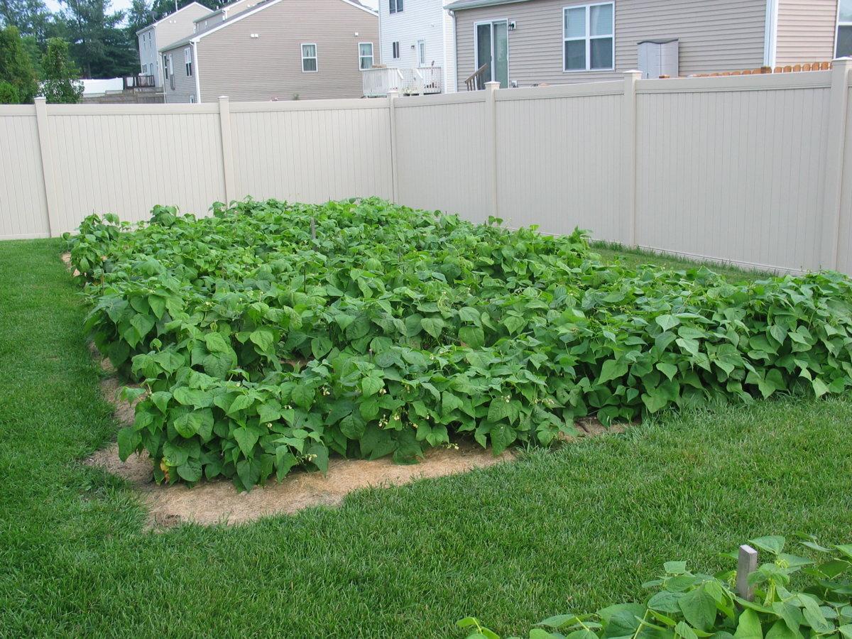 Backyard 7-26-17 #4.jpg