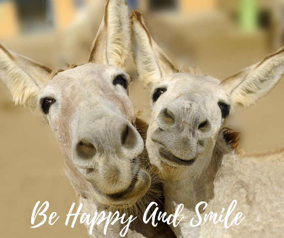 be happy mules.jpg