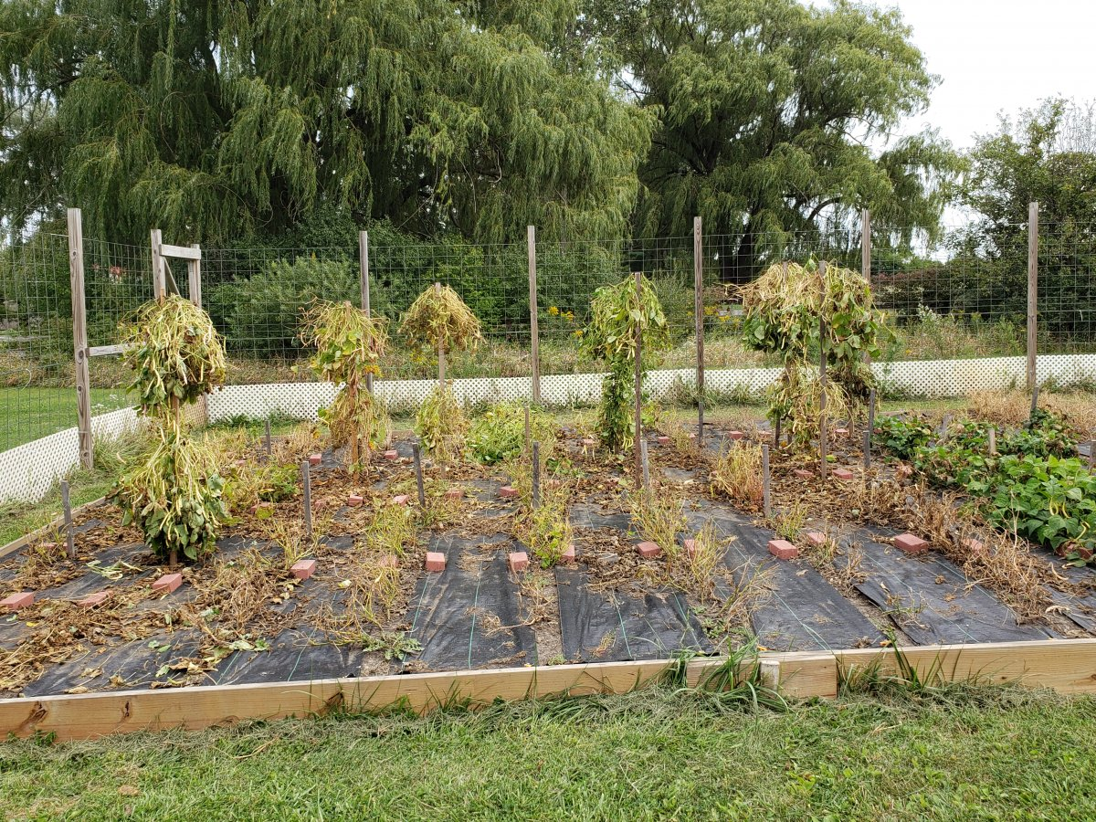 Bean Acres 9-11-2021 #1 .jpg