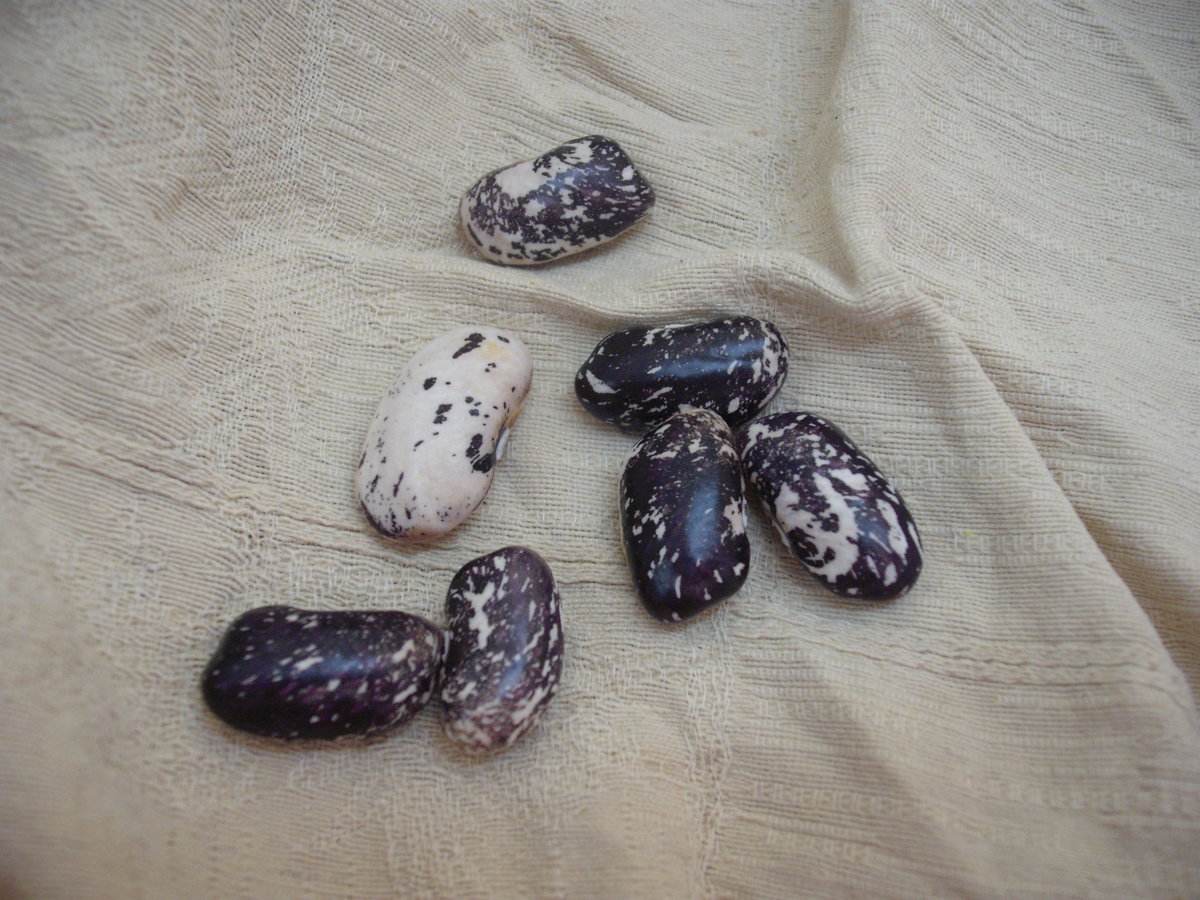 Bean Variety 2.JPG