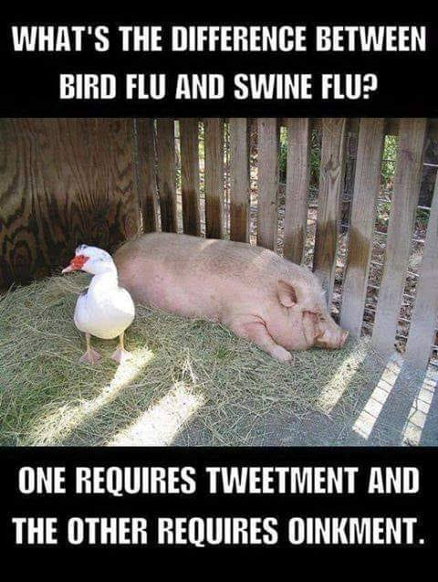 bird flu - swine flu.jpg