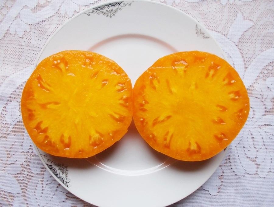 Bizon Oranżewyj 3.jpg