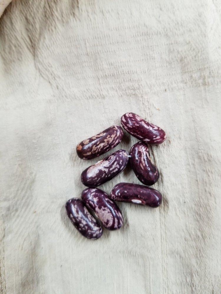 Bluejay Seeds.jpg