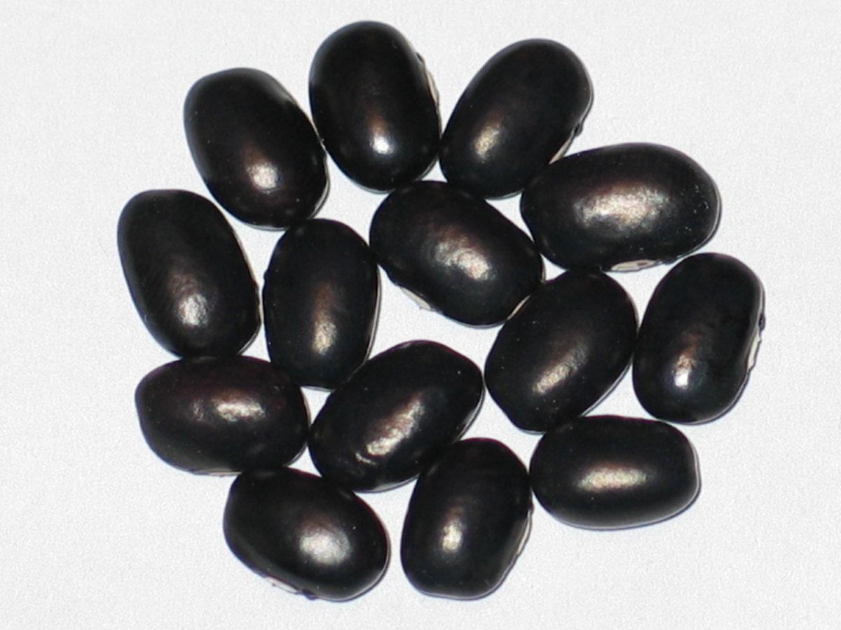 Choctaw Black #1.jpg