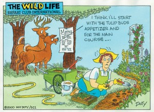 deer_in_garden_cartoon1.jpg