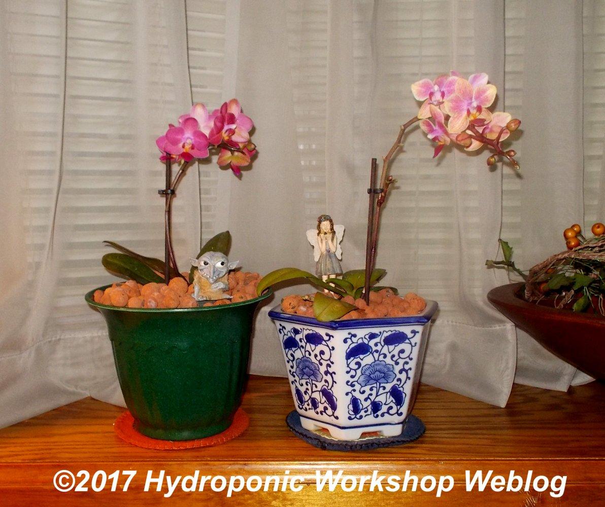 display pots.jpg