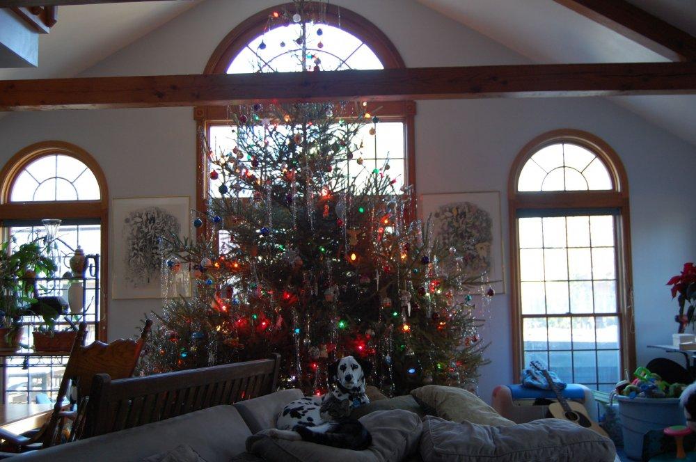 dog and tree.jpg
