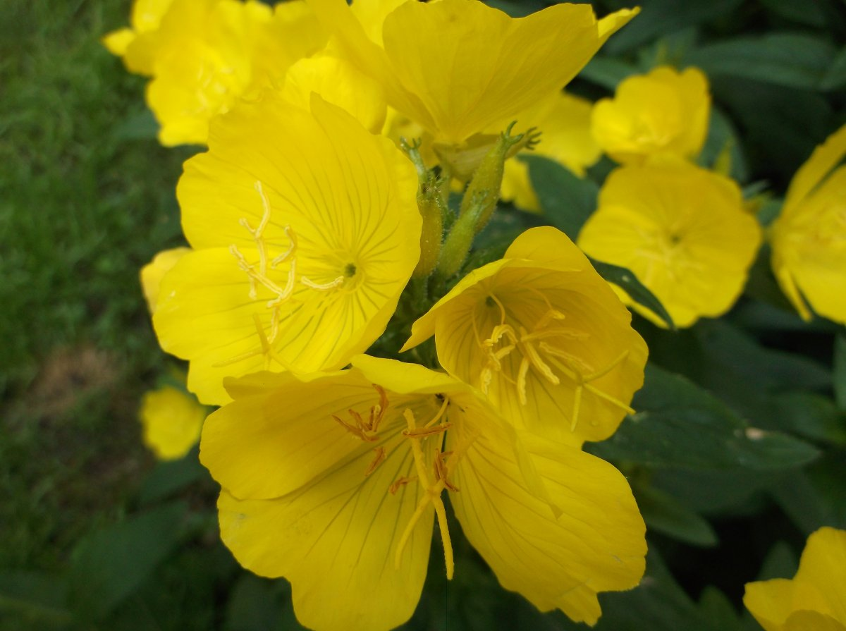 Name Yellow Flower
