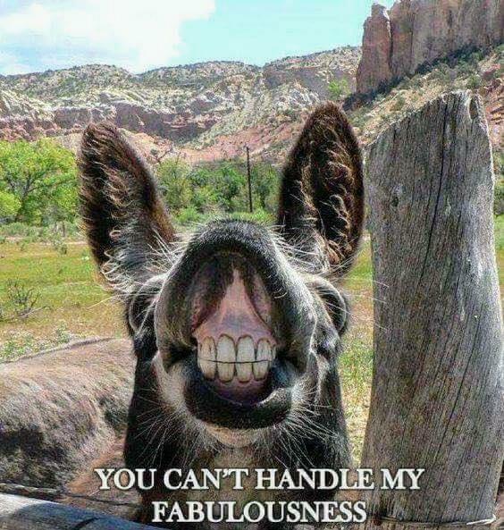 fabulous smile.jpg