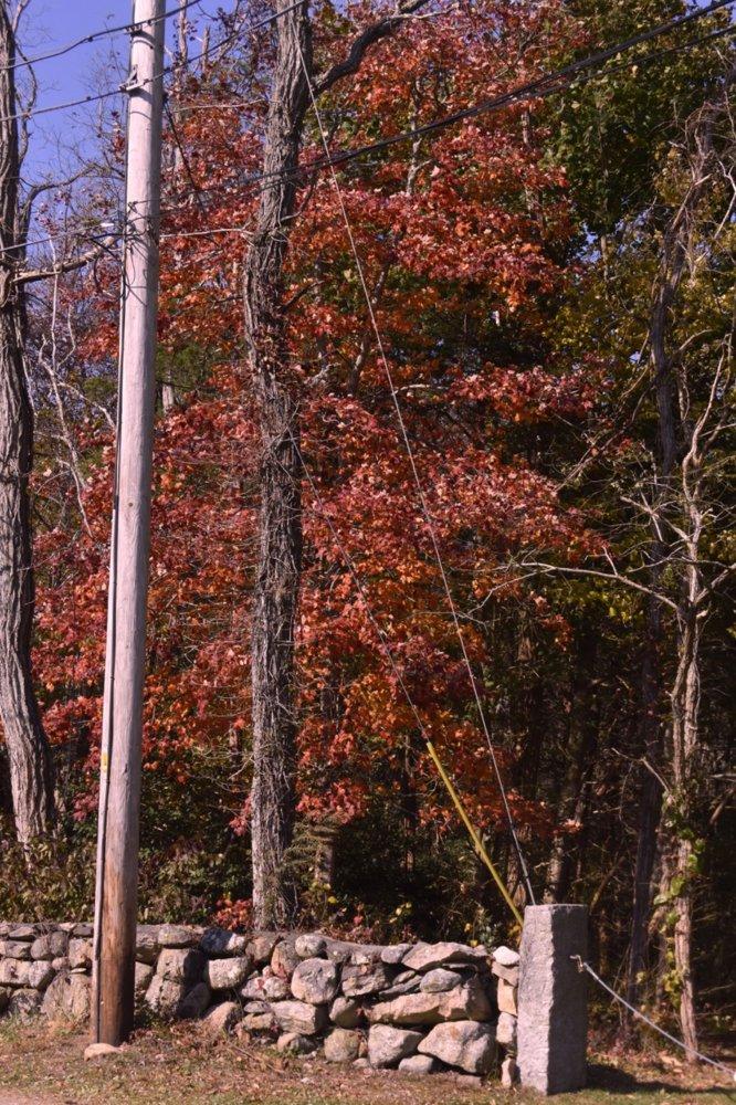 fall tree teg.jpg