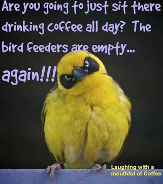 funny bird index.jpeg