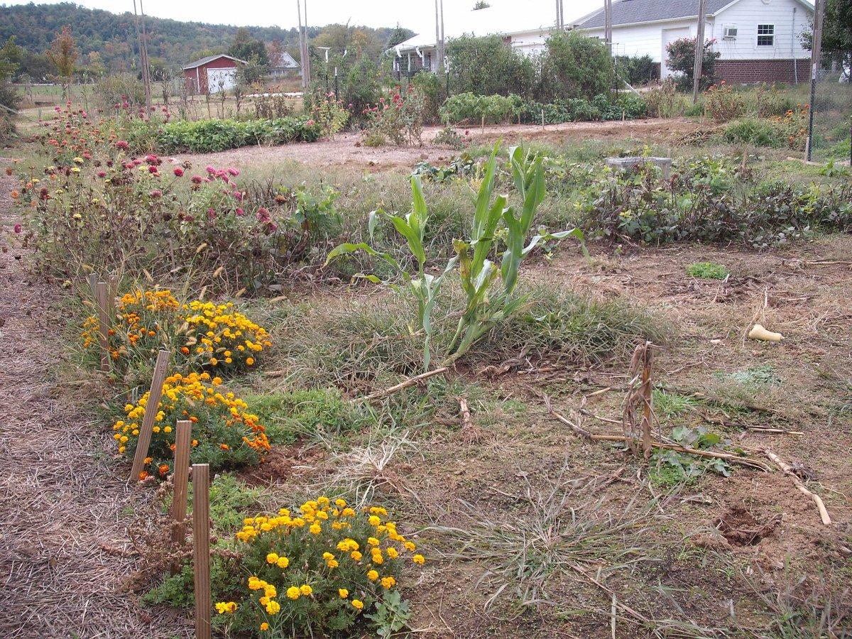 Garden NE.JPG