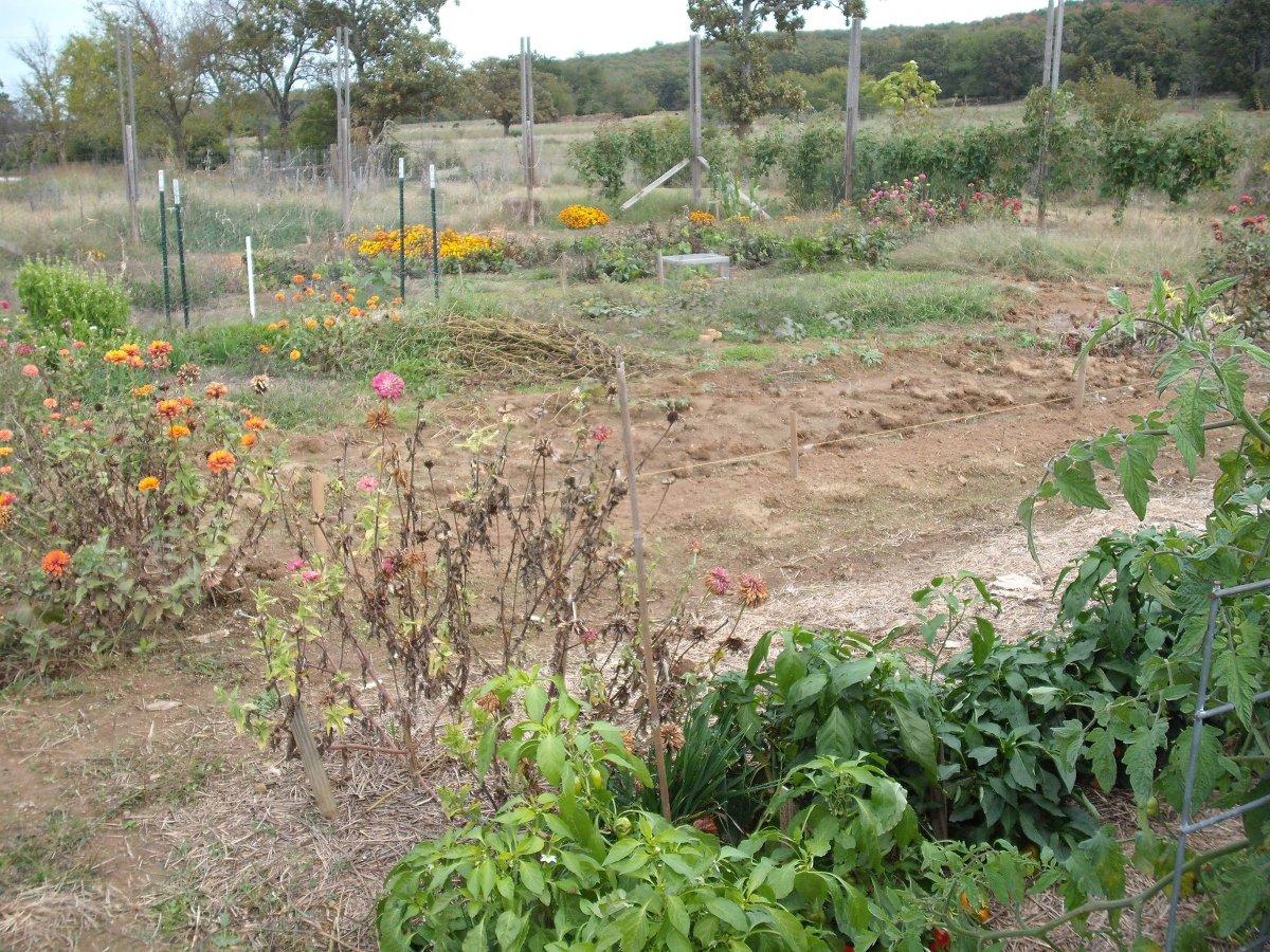 Garden SW.JPG