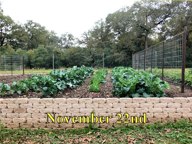 Garden1_112214.jpg