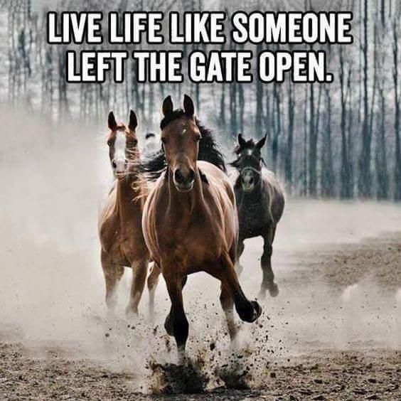 gate open.jpg