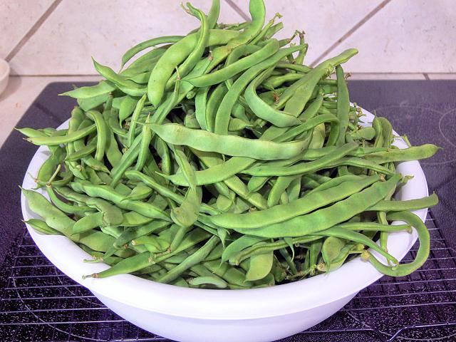 Green_Bean_Harvest_061017.jpg