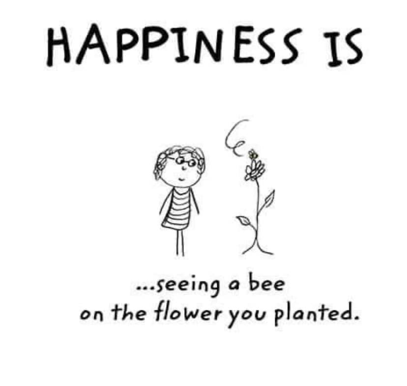 happiness is, blooming.jpg