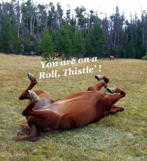 horse roll copy.jpg