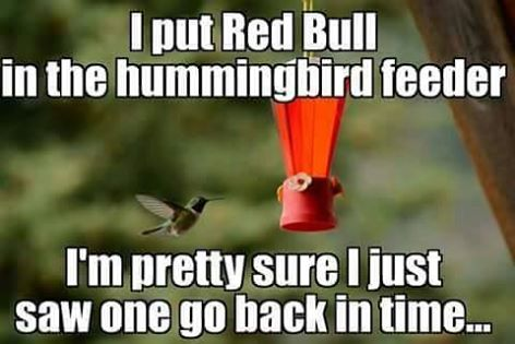 hummingbirds.jpg