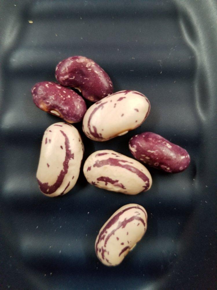 Jas Seeds.jpg