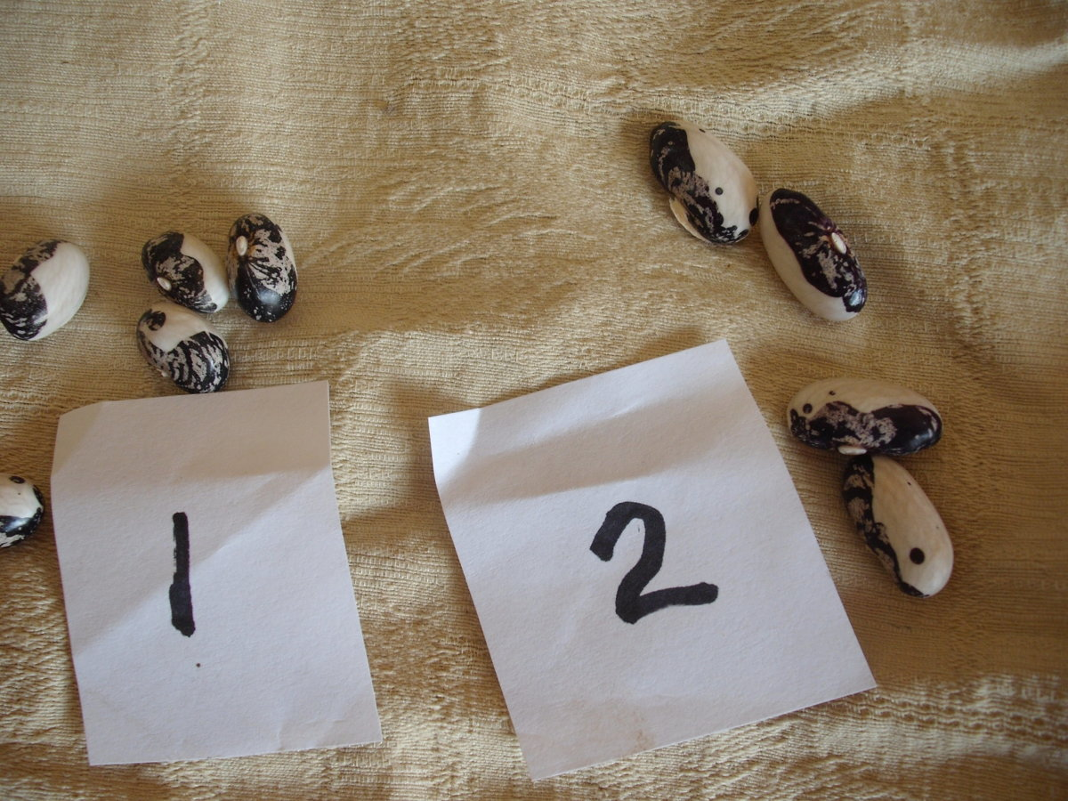 Kara 1 and 2 Beans.JPG