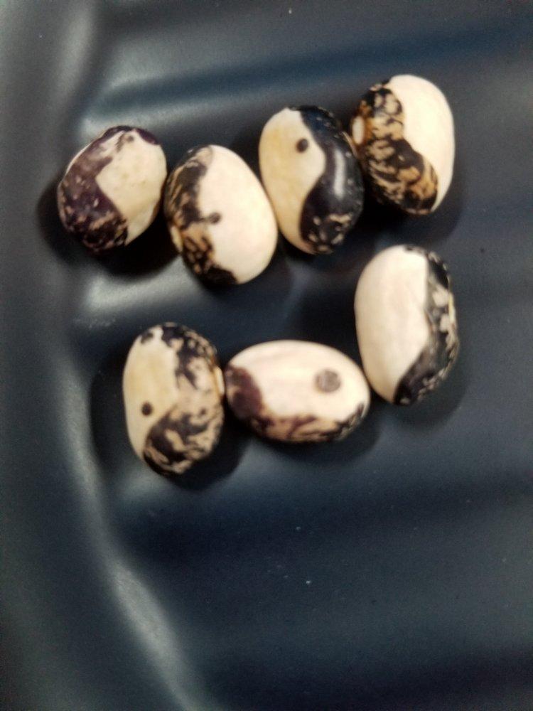 Kara Bush Beans.jpg