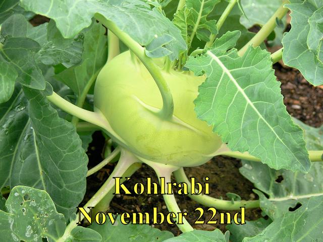Kohlrabi_112214.jpg