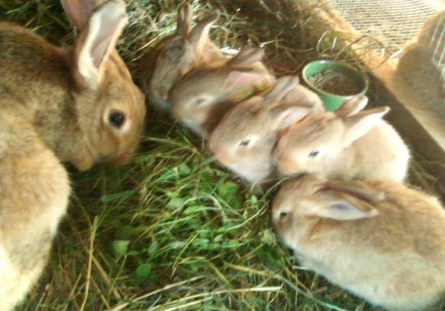 Lulu and her babies eating grass.jpg