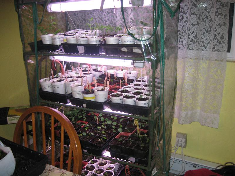 March 12 greenhouse.jpg