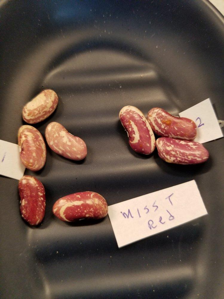 Miss T Red Beans.jpg