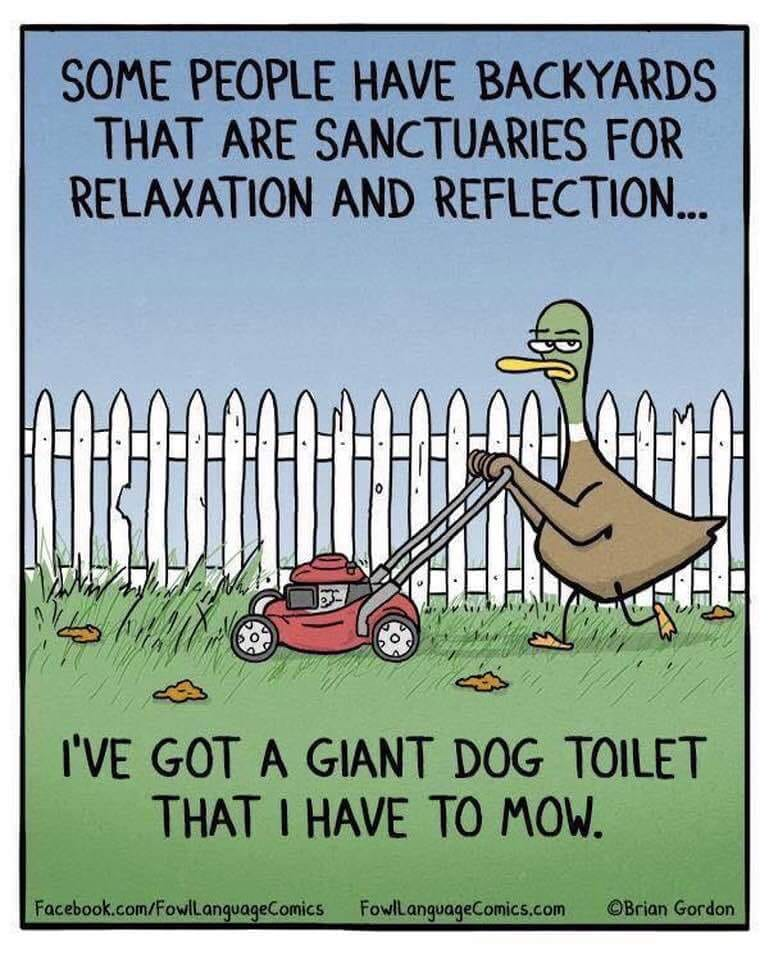 mowing the dog toilet.jpg