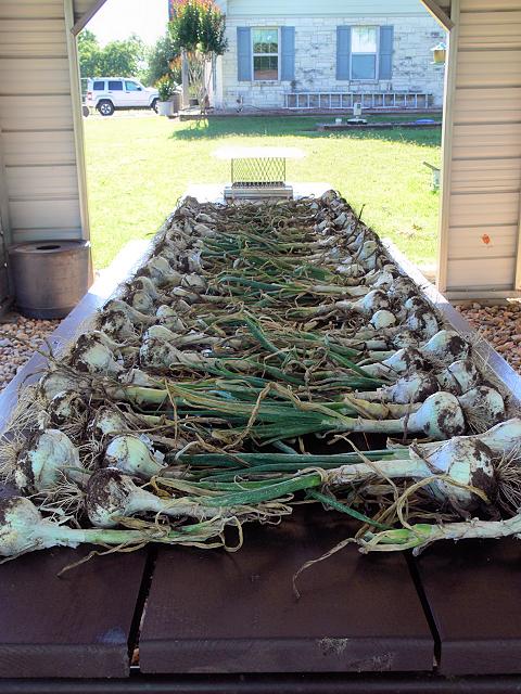 Onions3_042317.jpg