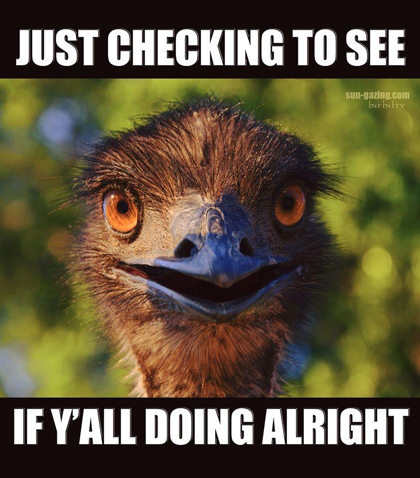 ostrich checking in.jpg