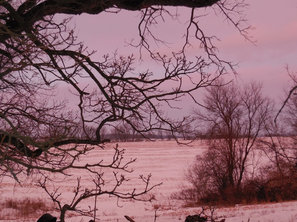 pink snow.JPG