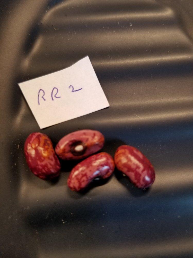 Raspberry Ripple 2 Beans.jpg
