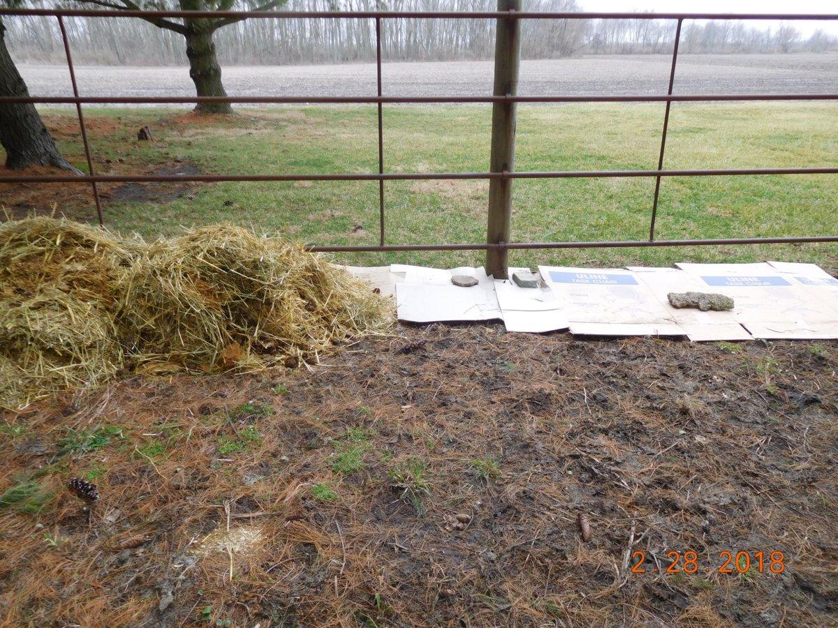 S side of S Pasture burdock fenceline, 2018.jpg