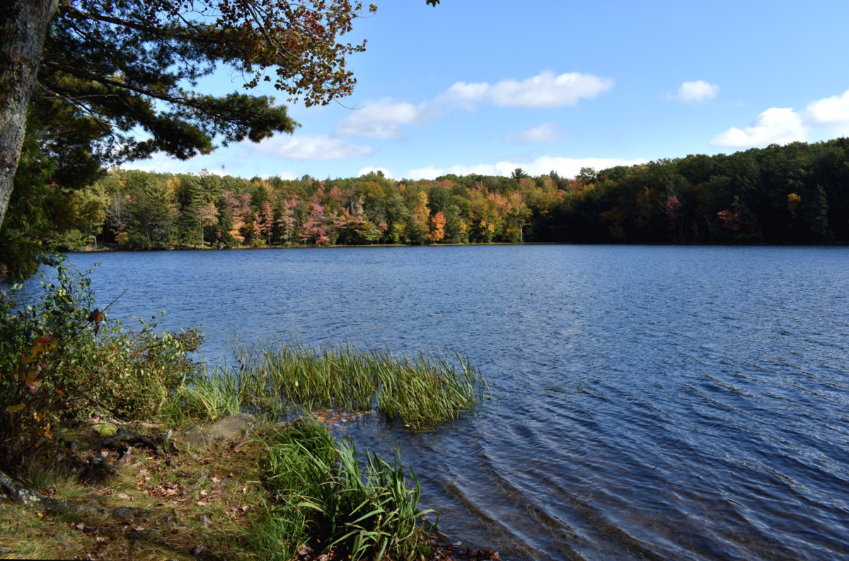 Second Pond 72.jpg