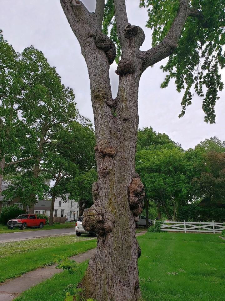 Sidney Gnarly tree, June, 2020, #4.jpg