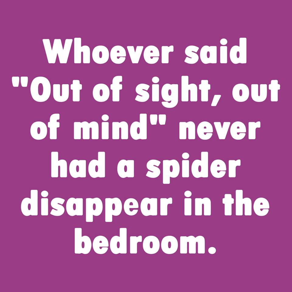 spider out of sight.jpg