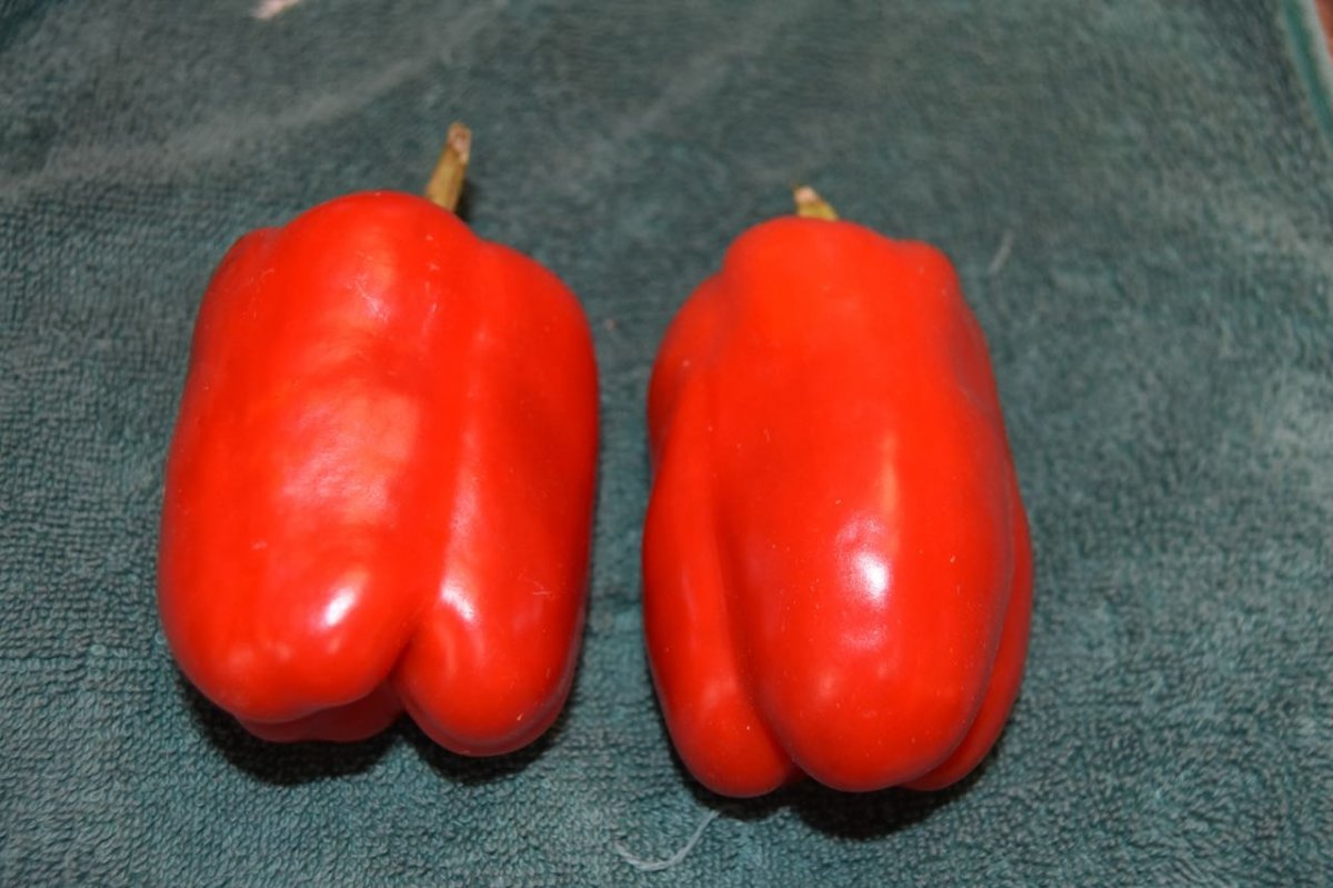 teg red peppers.jpg