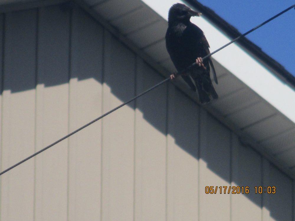 the bird again.JPG